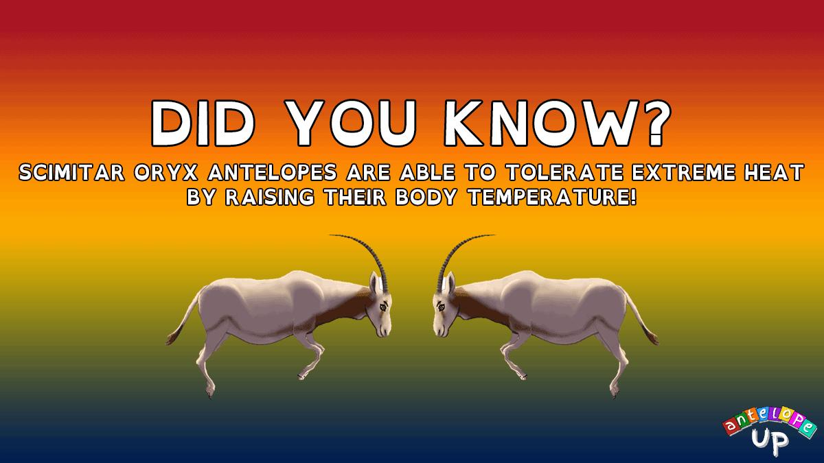 Antelope UP